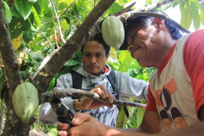 Forest Programme III (REDD+): West Sulawesi Province