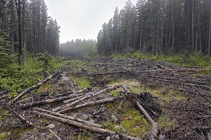 Deep learning for Caribou habitat disturbance mapping
