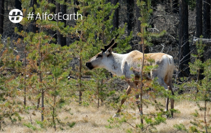 Hatfield receives grant from Microsoft's AI for Earth program, accelerating our work in caribou habitat disturbance mapping in northern Canada